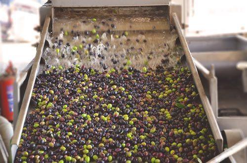 Olive-Wash